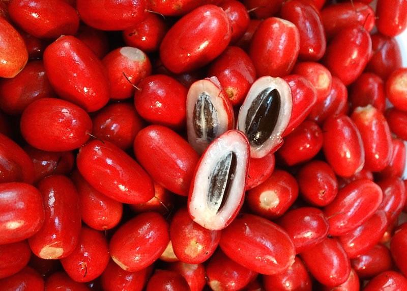 Entenda os benefícios da Fruta do Millagre (Synsepalum Dulcificum) para a sua saúde