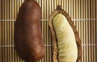Entenda os benefícios da  Jatobá-do-Cerrado (Hymenaea Courbaril) para a sua saúde